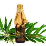 Manfaat Minyak Kayu Putih dan Cara Bedakan Kayu Putih Asli atau Palsu